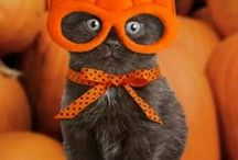 Cats in Costumes / Get the cutest ideas and inspirations for cat Halloween costumes!