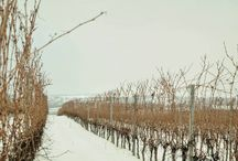 Kristinus vineyard in winter / 'Our wine estate in white.'  Kristinus - Cellar key to Lake Balaton.