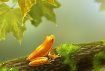 Frogs / Frogs are cute and fun!  Love them