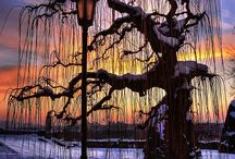 きれいな木