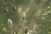 Animals | Horses