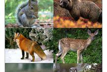 erdei állatok