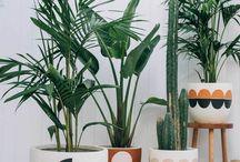 Blum / Florystyka dekoracja rośliny
