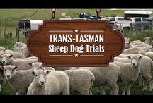 Trans-Tasman Sheep Dog Trials / A series we produced for Country TV covering the Trans-Tasman Sheep Dog Trials