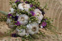 Garlic/česnek