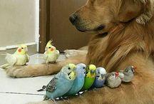 animals zwierzaki :)