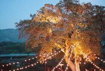 wedding lighting outdoors