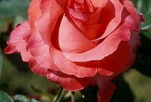 Flower Inspiration Pics