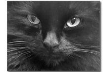 Black Cat Gift Store