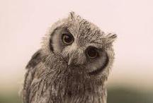 Owls / by Sharon Shaeffer Sanderson