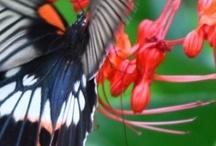 Butterflies / by Vicki Wilson