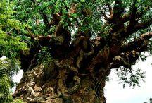 Ancient forest - mistik ormanlar / Ancient forest, mistik, esrarlı, garip, doğaüstü görünümlü, yosun tutmuş, karanlık ormanlar hakkında