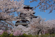 """Sakura (桜)Hotspots in Kyoto! / Flower Viewing or """"Hanami"""" is the centuries-old practice of picnicking under a blooming sakura or ume tree.  In the Heian Period (794–1185), cherry blossoms came to attract more attention and hanami was synonymous with sakura. From then on, in both waka and haiku, """"flowers"""" meant """"cherry blossoms"""". The custom was originally limited to the elite of the Imperial Court, but soon spread to samurai society and, by the Edo period, to the common people as well."""