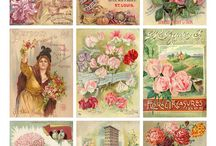 Pictures for shabby chic