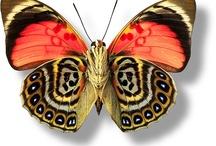 Výtvory z peria