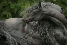 Лошади / Фото лошадей