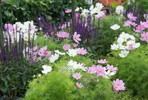 Hampton Court Flower show 2015 / Inspiration from the stunning show gardens at this year's RHS Hampton Court Flower Show.