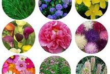best cut flowers to grow / Best cut flowers for growing in your garden or on your flower farm. Annuals and perennials as cut flowers. Easy cut flowers.