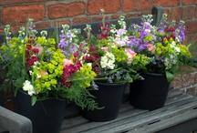 *buckets of flowers* the flower farm