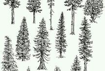 Kresba stromy
