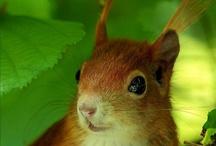 Squirrel kawaii