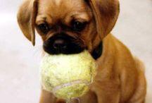DOG CONTENT // SHELTIE LOVE / Sheltie Emmi und andere Hunde