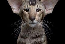 Cat pumi / Soooooooo its cute