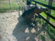 Horse safety / #Horserail #Safety