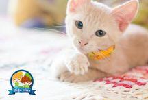 Pet / Pra todo mundo que ama seus bichinhos, e que ama fotógrafa-los. Visite Www.digaxiiis.com