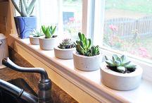 Plantas e vasos