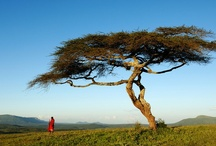 Out of Africa / trek in Masaï country (Tanzania) : Mt Meru to Serengeti / by Christophe Fourleignie Duc