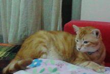 My Cats / Onlarsız hayat düşünemiyorum..