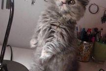 Hal-hal yang saya sukai kitten kittys