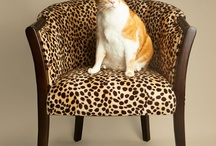 Cats on Chairs / by Kira Stackhouse