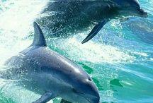 Photography de delfines