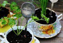 house, herbs indoors, zioła w domu