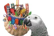 Parrot Enrichment Toys / Learn how to enrich your parrot to prevent behavior problems such as feather picking, feather plucking, screaming, biting and other parrot behavior problems