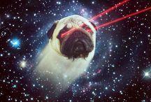 Lazer and galaxy / Cat, Kitty, Lazer, Space, Deep Dream, Pug and Galaxy