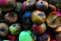 Rotton fruits