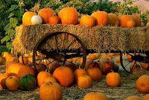 I love Autumn / by Rose Fuller