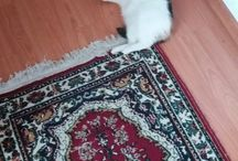 Cati, my cat