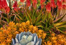 Xeriscaping for Dry Gardens / You like it dry and so do these plants!