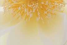 Yellow / by Hiroe Hanafusa