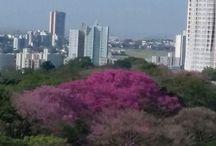 MARINGÁ-PR, BRASIL
