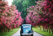 Lovely Drives