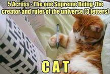 Corbini cat and deedee cat