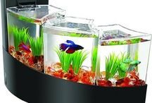 A choice of a good #aquarium makes your décor marvelous