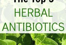 Antibiotics-Herbal