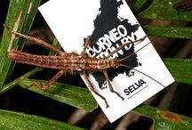 Borneo Collection