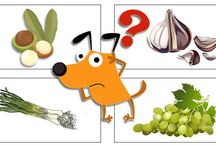 Safe & Natural Flea Control For Dogs